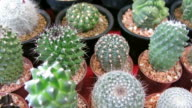 Various Potted Cacti video