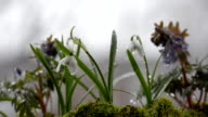 Various spring flowers in rainy weather. Selective focus video