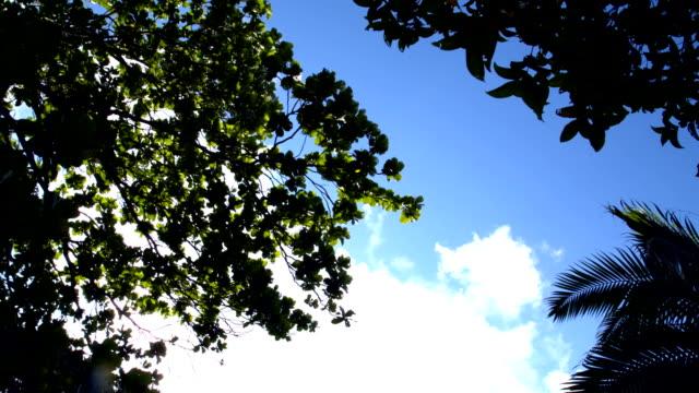 Various Tree Leaves in the Wind video
