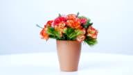 Vase of joy and beauty video