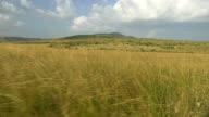 SLOW MOTION: Vast meadow in Africa video