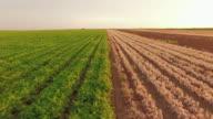 Vegetable Fields On Rural Farmland video