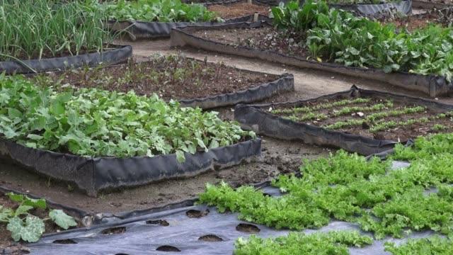 Vegetable Garden, Food Crops video