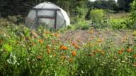 Vegetable garden irrigation video