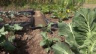 Vegetable Plants, Leaves, Foliage, Nature video