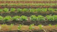 Vegetable video