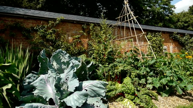 Vegetables at a botanical garden video