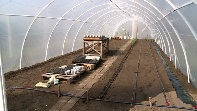 vegetables greenhouse video