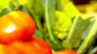 vegetables on the market stand: tomatoes, cabbage, red, green video