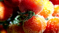 Vegetables. Tomatoes in water with bubbles video