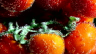 Vegetables. Twig of tomatoes in water with bubbles video