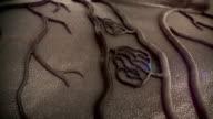 vein, human vein video