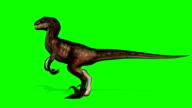 Velocirapor Dinosaurs roars - green screen video