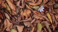 HD: Vertical Fallen Autumn Leaves video