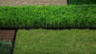 Vertical farming video