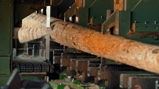 Vertical saw cutting logs video
