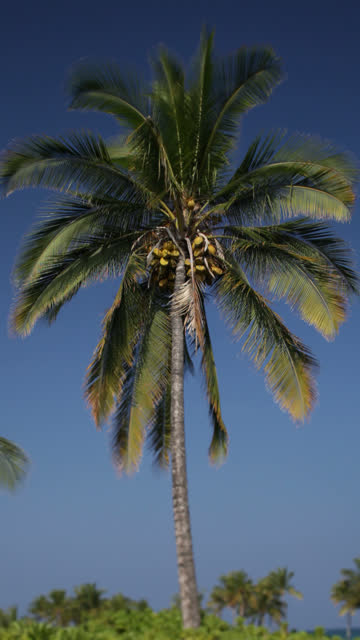 Vertical Video of Coconut Palm Tree against Sky video