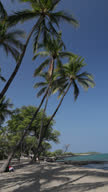 Vertical Video of Coconut Palms over Beach and Water video
