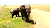 Very Dangerous Condition at Wildlife with Mother and baby elephant video