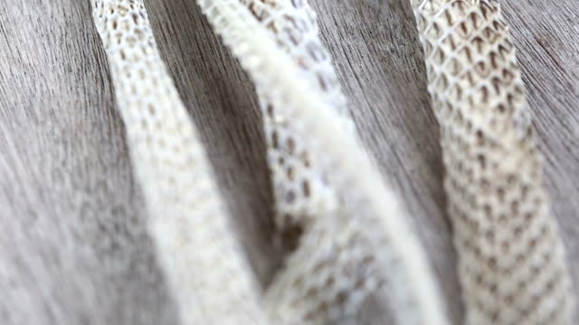 Very Long White Shedding Snake Skin on Wooden Floor, close up Macro selective focus, blur some spots video