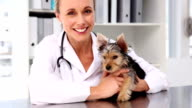 Vet checking a yorkshire terrier video