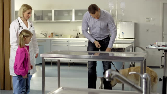 Vet Examining A Dog With Injured Paw video