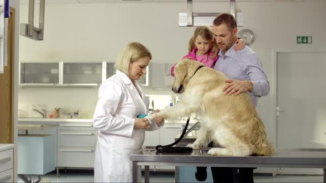 Vet Examining A Dog's Foot video