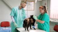 Vet giving dog anesthetic video
