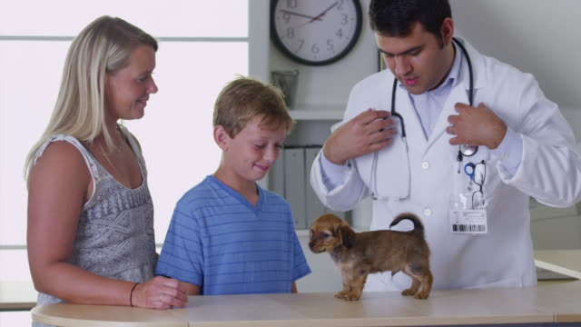 Vet giving puppy a checkup video