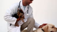 Vet kneeling with two dogs video