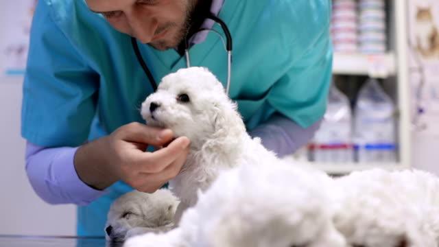 Vet stroking puppy video