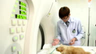 veterinarian doctor working video