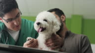 Veterinarian Examining A Dog video