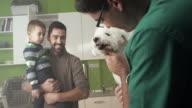 Veterinarian examining a dog video
