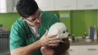 Veterinarian Examining A Little Dog video