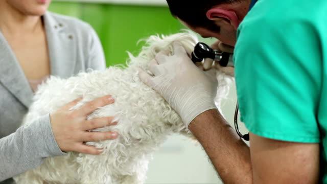 Veterinarian Examining Dog video