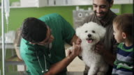Veterinarian examining little dog video