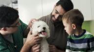 Veterinarian examining little dog video