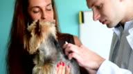A veterinarian inspects a little dog video