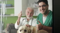 Veterinary examine Labrador And Shoving Thumbs Up video