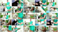 Veterinary. Video Wall. video