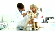 Vets examining a Golden Retriever puppy. video