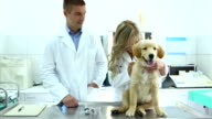 Vets examining retriever puppy video