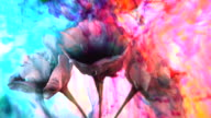 Vibrant colorful springtime background with blossom in full colour video