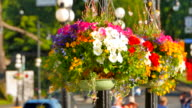 Victoria BC Hanging Flower Baskets on Lamp Posts, Downtown City video