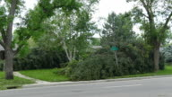 HD video Denver Colorado violent storm high winds topple trees video