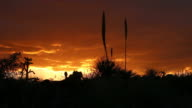 HD video Desert sunrise in Valley of the Fires New Mexico video