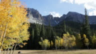 HD Video Fall Aspen and Nevada's Great Basin National Park video