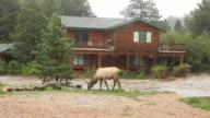 HD video home flooding and elk Estes Park Colorado video