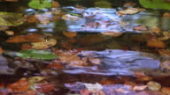 Video nature background - autumn leaves on water pond video